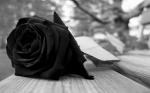 Букети от черни рози