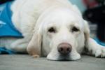 Често срещани грешки на (бъдещи) собственици на кучета – част 2