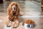 Съвети за правилно хранене на вашето куче