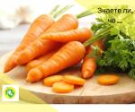 Факти за морковите, които трябва да знаете