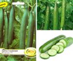 Как да посеете семената от краставиците